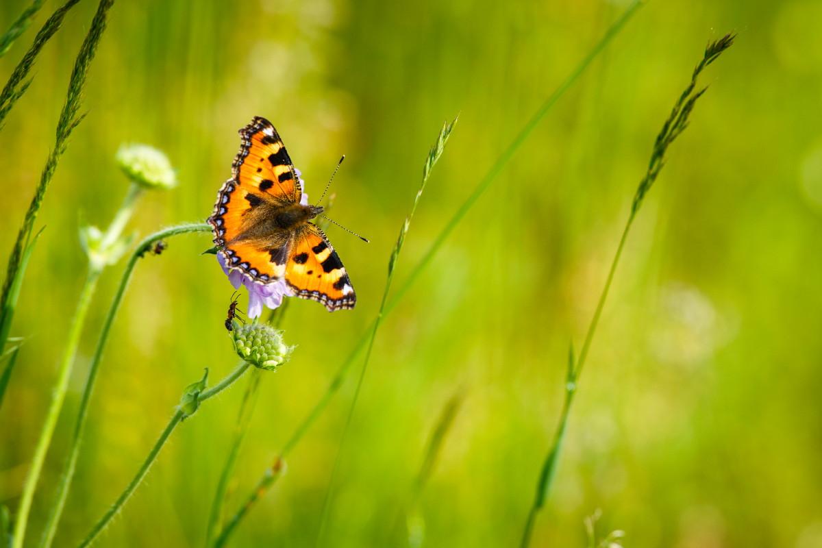 Le papillon et la fourmi