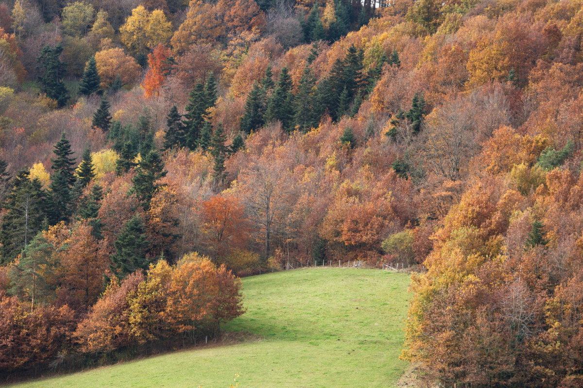 L' automne en forêt
